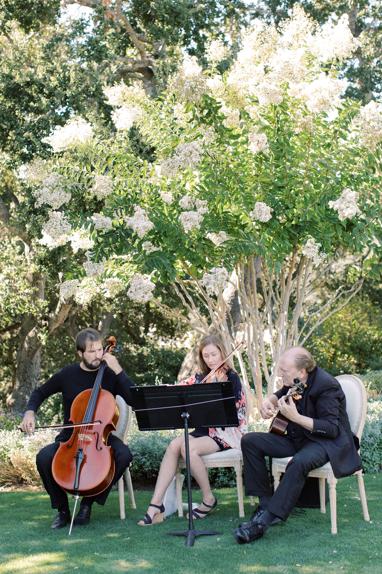 string trio playing outdoors