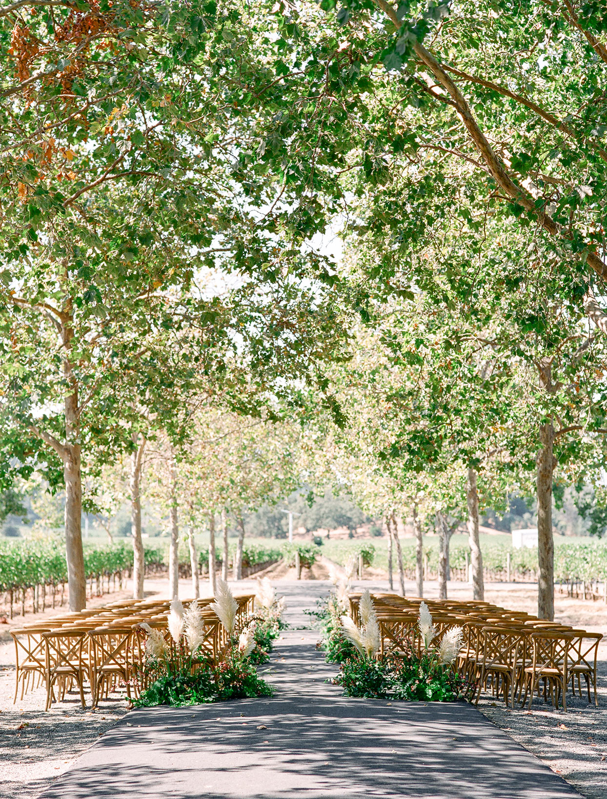 outdoor ceremony wooden chairs set up with vineyard surrounding