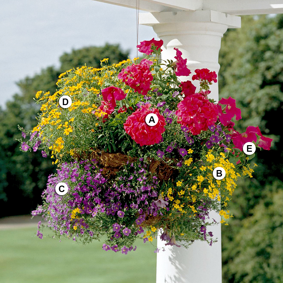 bold colors in hanging basket with geranium and marigold