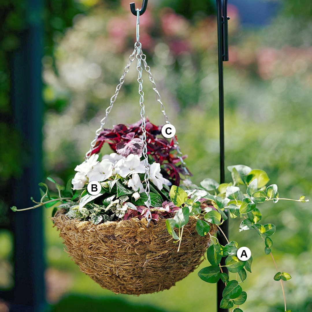 vinca coleus and coleus hanging from shepherds hook