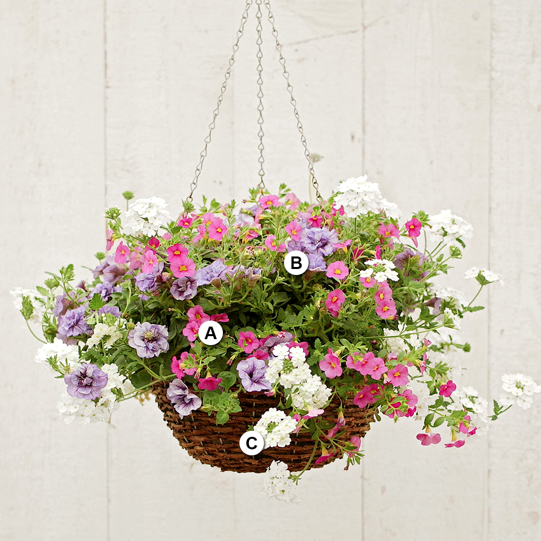 calibrachoa verbena petunia in hanging basket
