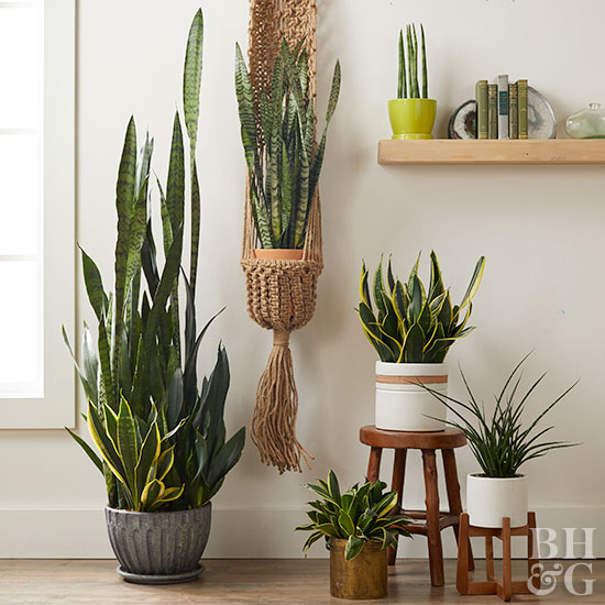 Houseplants on floor stools shelf hanging