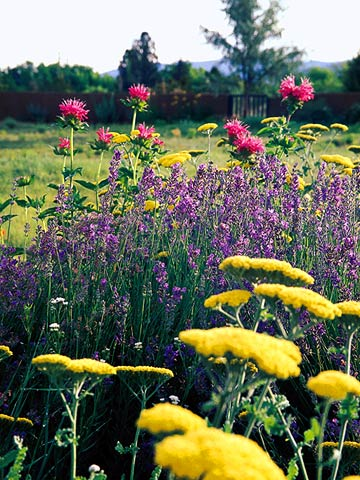 Perfect Pink And Purple Plant Combinations Better Homes Gardens