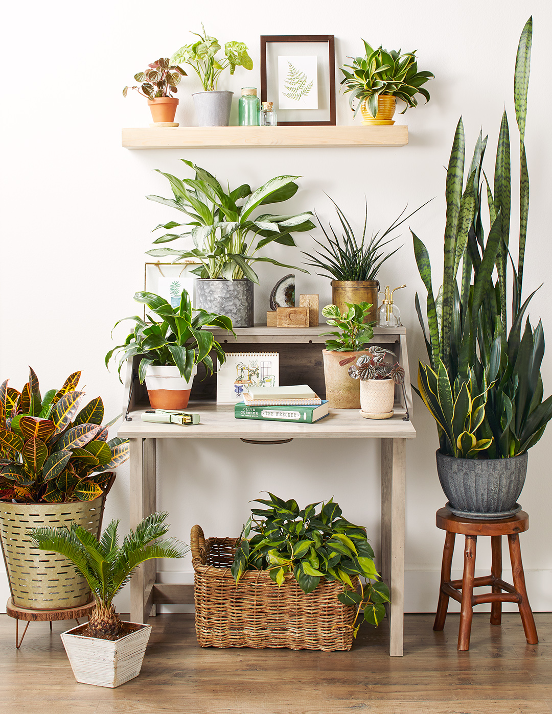 variety of houseplants in home on top of secretary desk
