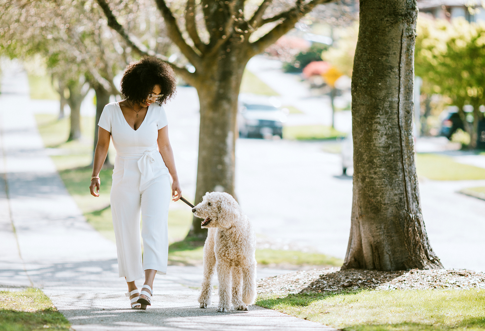young woman walking standard poodle