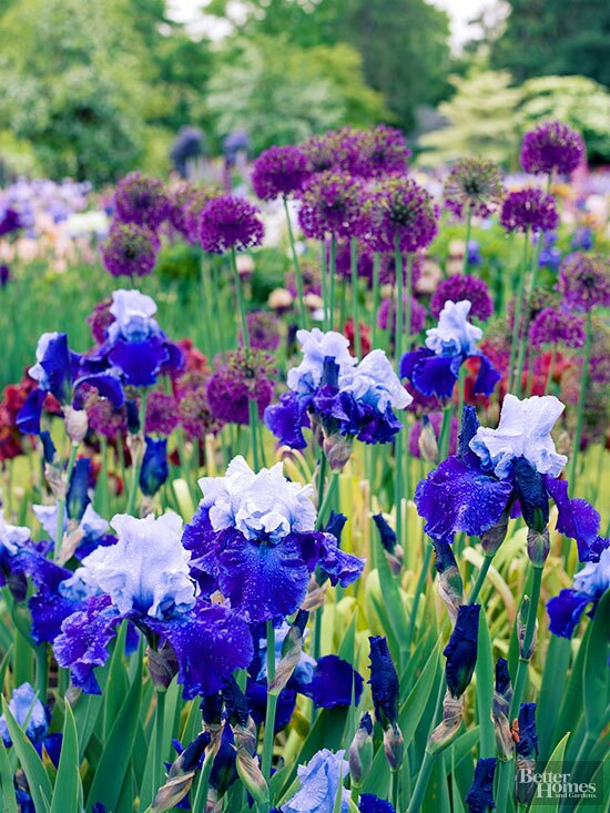 Magnificent Perennial Flowers By Season Better Homes Gardens Pdpeps Interior Chair Design Pdpepsorg