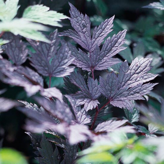 8 Easy Perennials For The Pacific Northwest