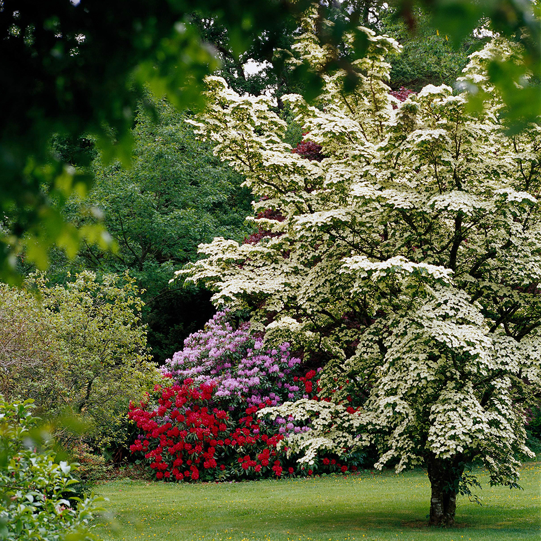 Fast Growing Trees For Creating Privacy Better Homes Gardens