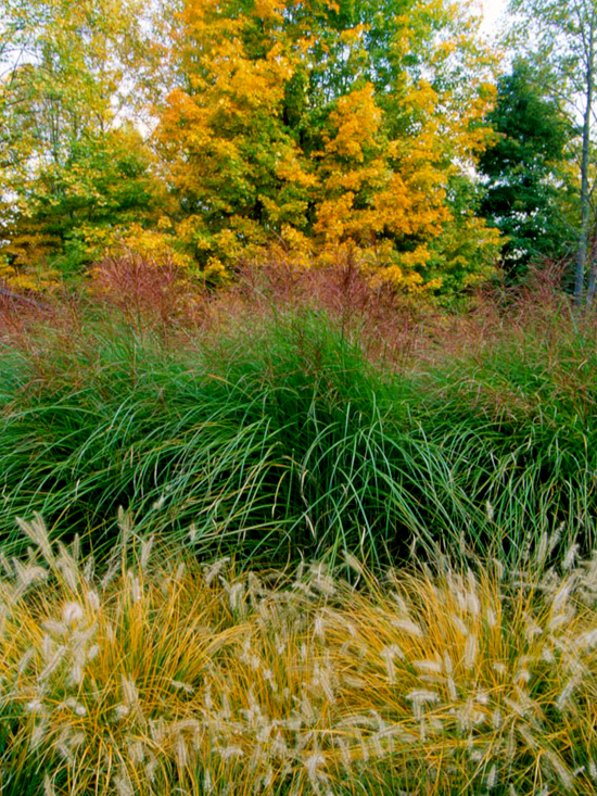 Fall Festival of Ornamental Grasses