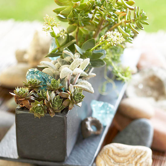 Succulent-Filled Centerpiece
