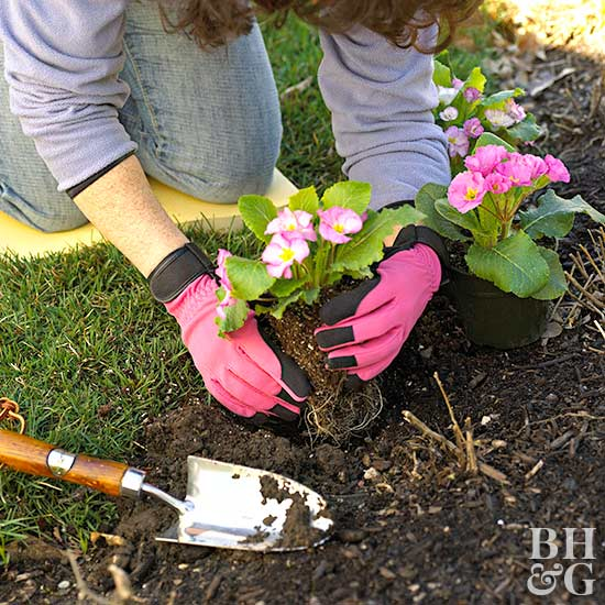 woman planting pink flowers