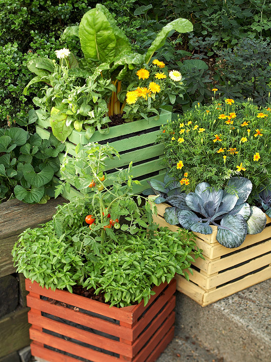 15 Fun Ideas For Growing Tomatoes Better Homes Gardens