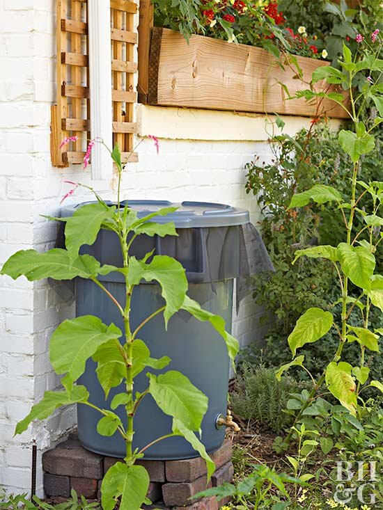 Save Water (and Money!) By Making Your Own Rain Barrel