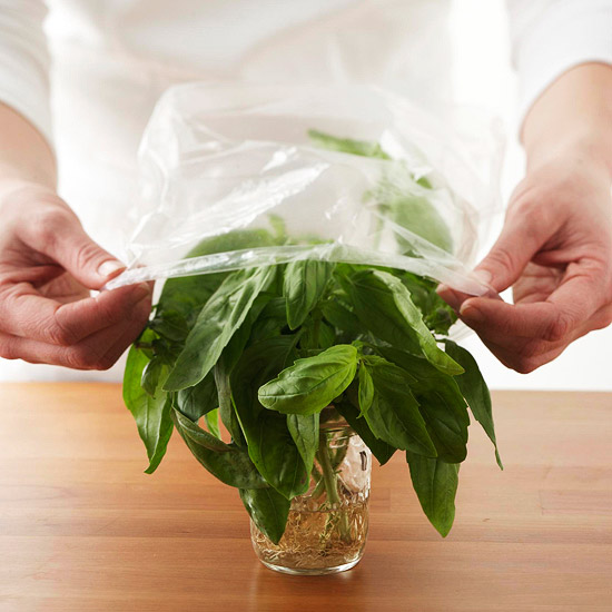 Storing fresh basil in water covered with plastic