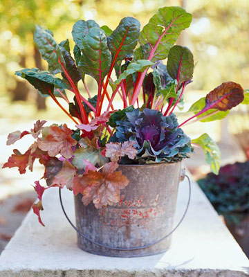 Swiss chard, flowering kale, and 'Marmalade' coralbells