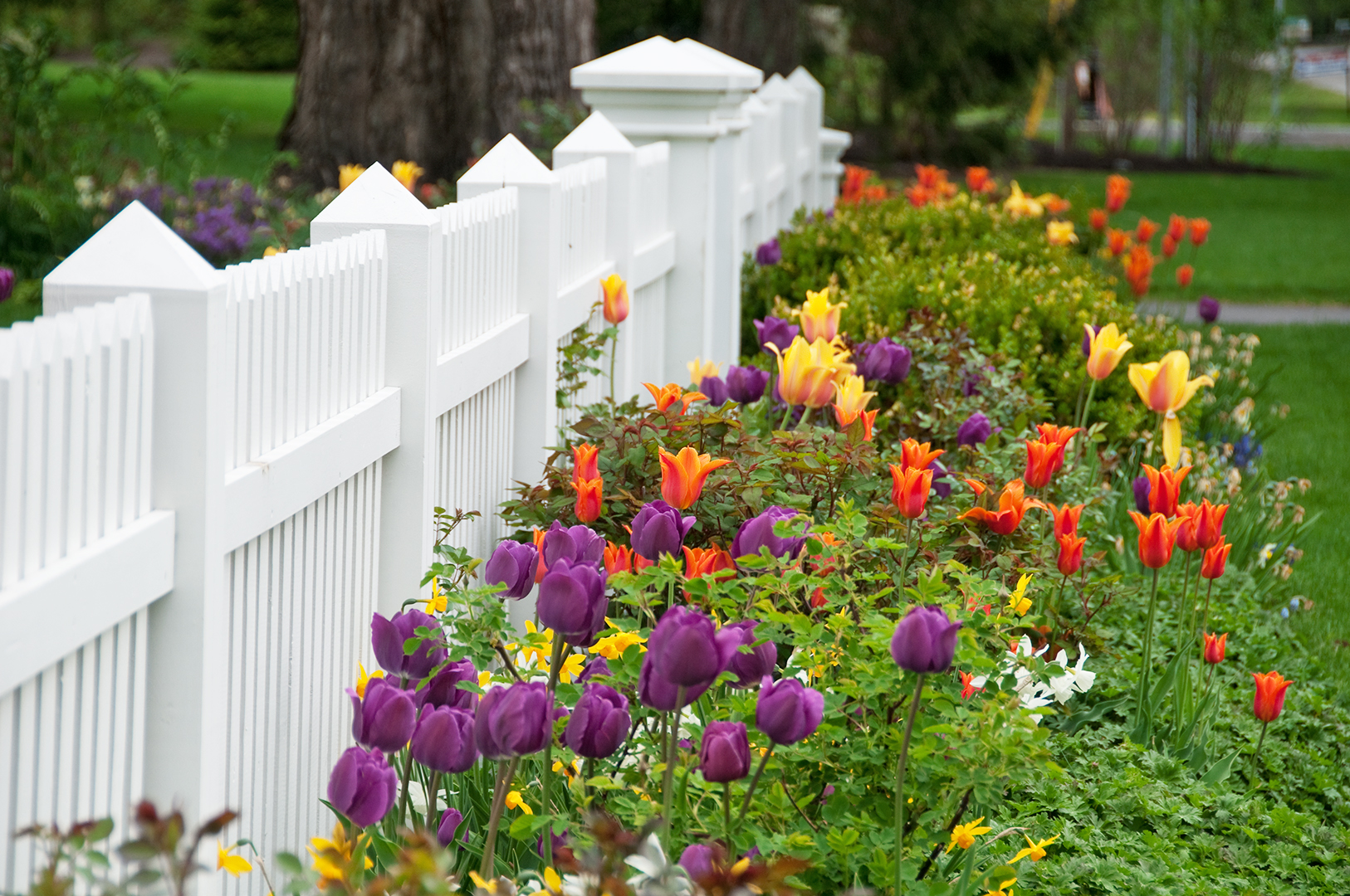 flowers growing next to a white picket fence
