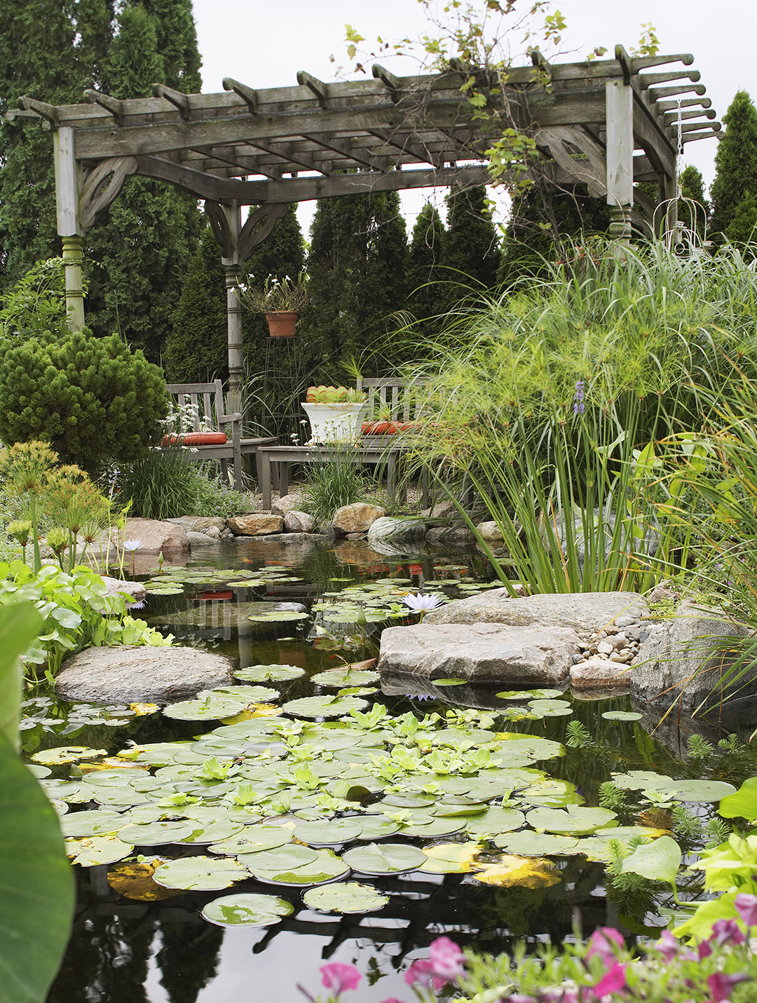lily pads in stream next to pergola