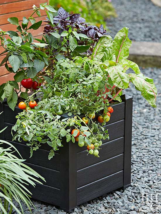 Tips For Growing Healthy Tomatoes Better Homes Gardens