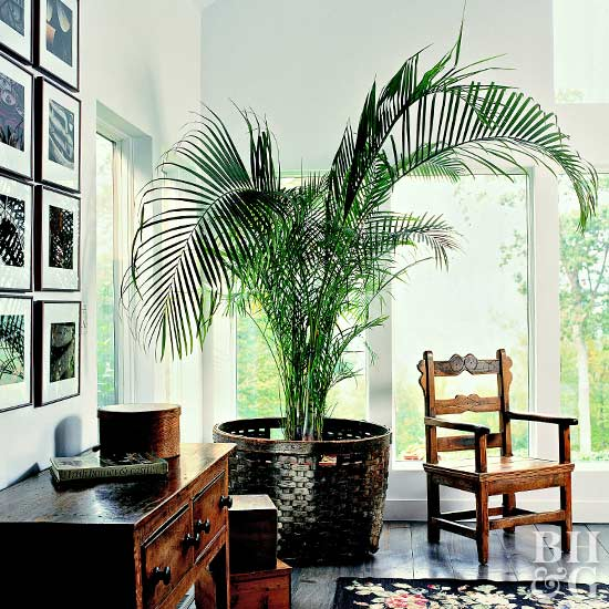 large indoor palm tree in basket