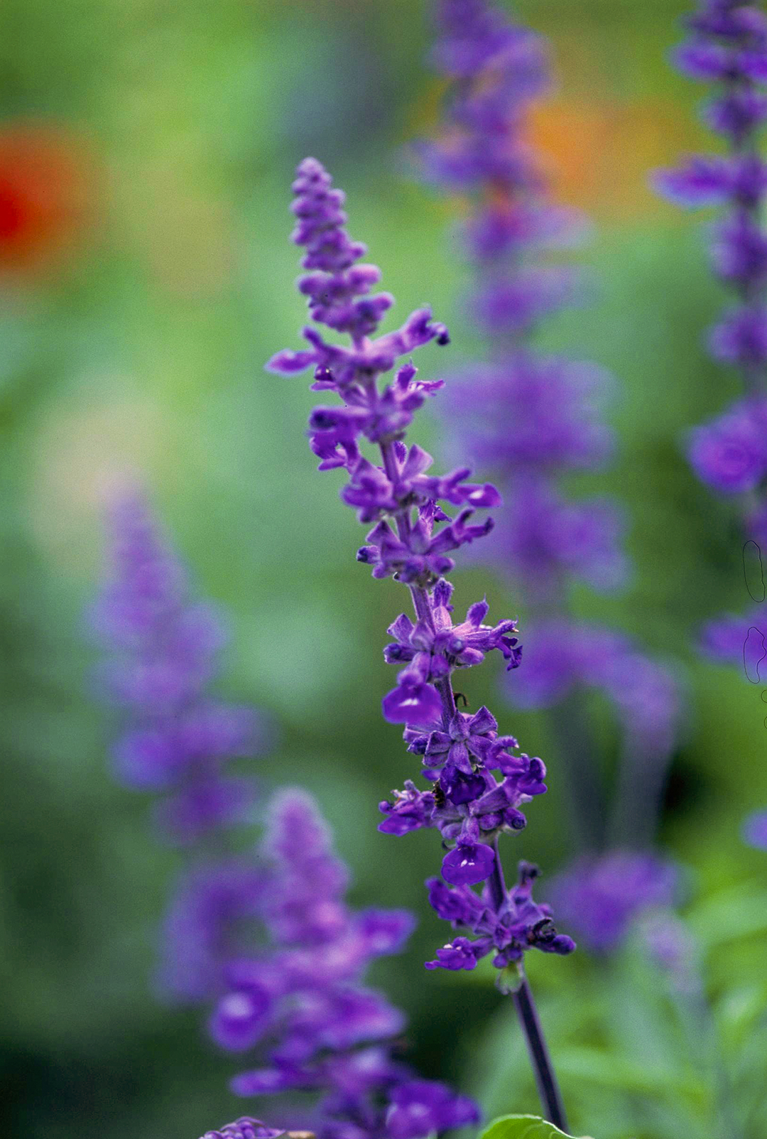 Garden Guides The Best Flowers To Plant In Texas
