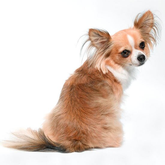 Names For Small Dogs Better Homes