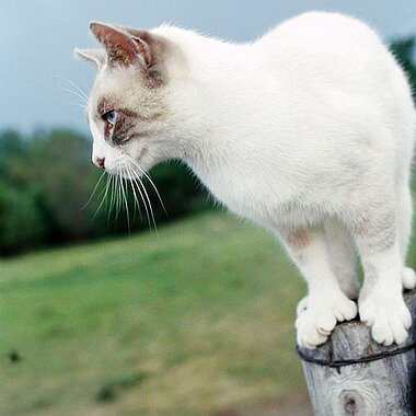 Extra-Toed Cats | Better Homes & Gardens