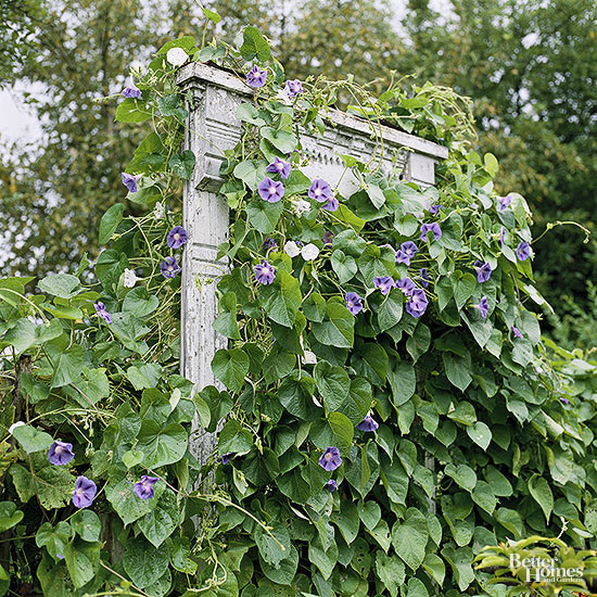 building a window frame trellis
