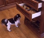shihtzu dog and 2 pull-out drawers