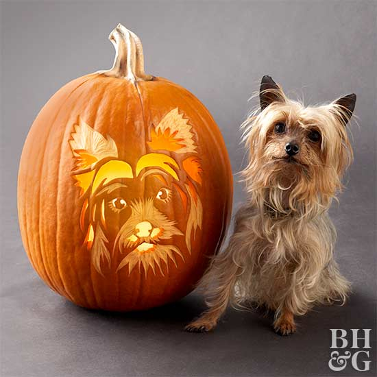 Yorkshire Terrier carved pumpkin stencil with Yorkie model