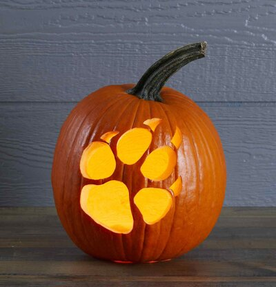 Paw Print Pumpkin Stencil Better Homes Gardens