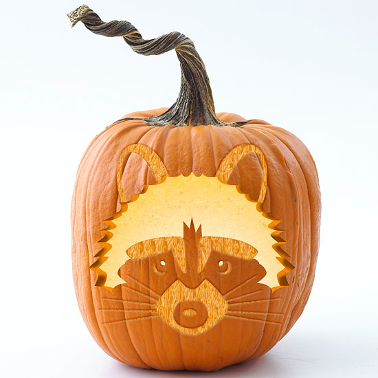 raccoon pumpkin