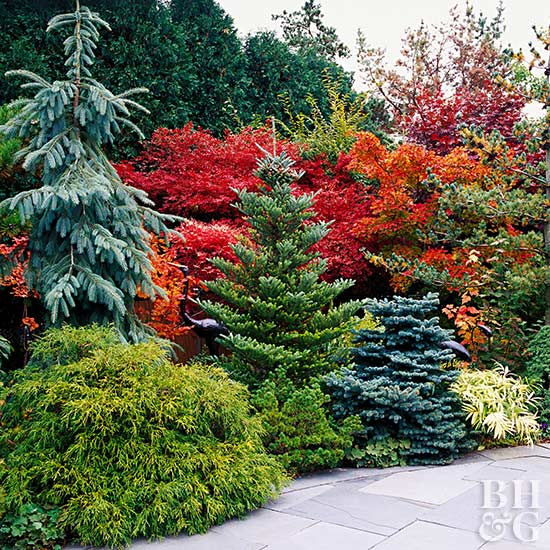 Use Evergreens To Make An Impact In Your Landscape Better Homes