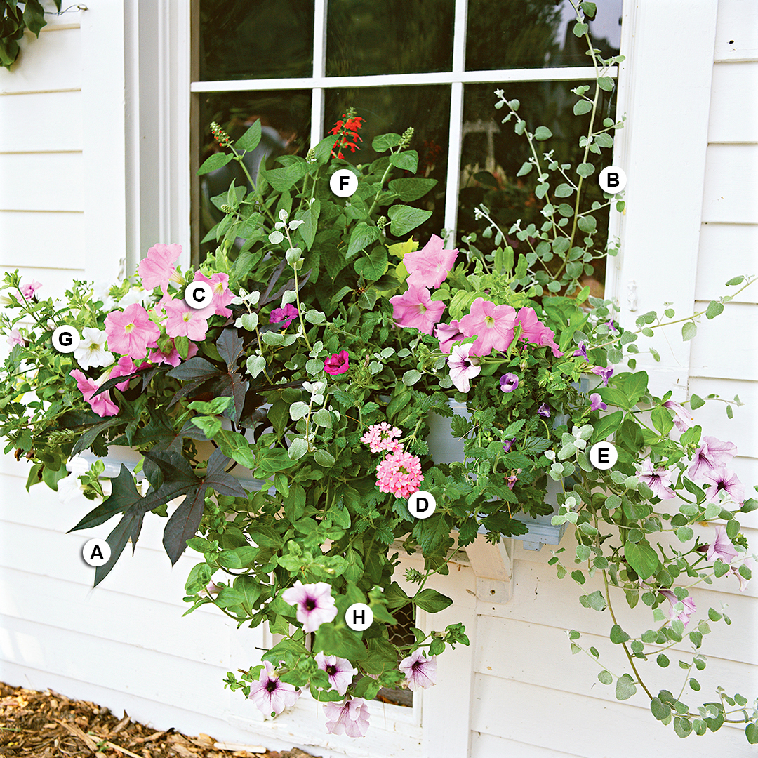 cottage-style window planter with petunia verbena salvia