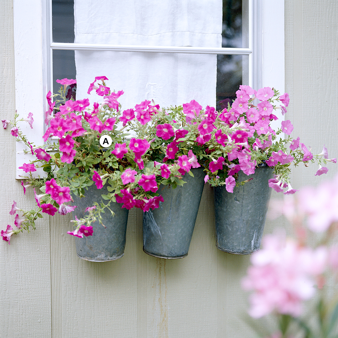 window with sap-bucket containers of petunias