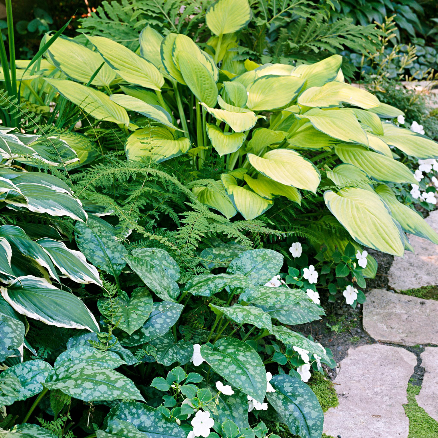hosta perennials shade plants