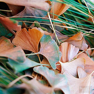 What Causes Brown Tips On Plant Leaves Better Homes Gardens