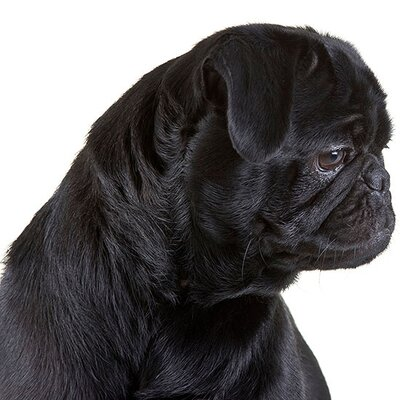 Coping with the Death of Your Pet | Better Homes & Gardens