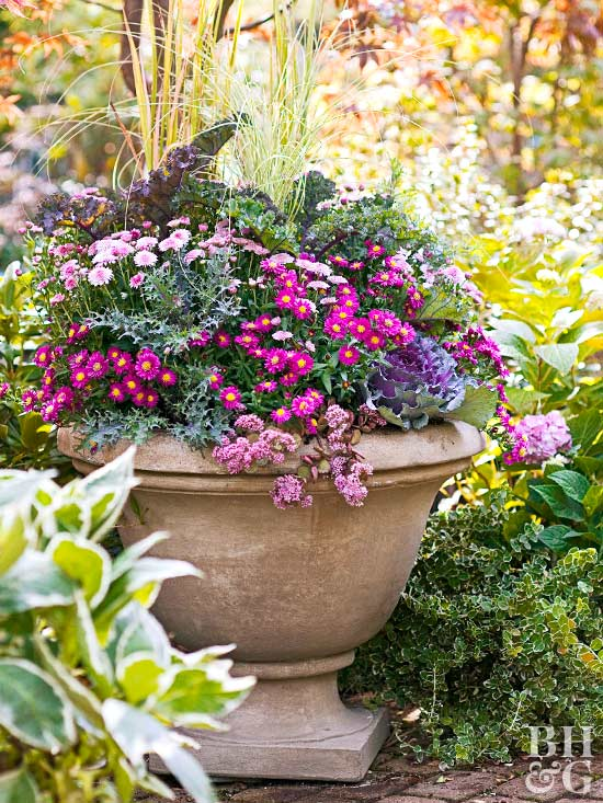 multiple varieties of mums in a concrete garden urn container