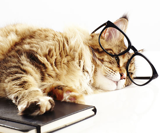 cat with book and glasses