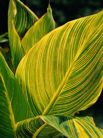Garden Plants With A Tropical Flair Better Homes Gardens