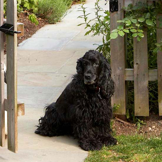 Dog with open gate