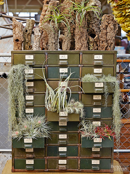Air plants, air plant, air plant ideas