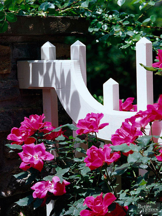 Detail of white picket fence and pink flowers