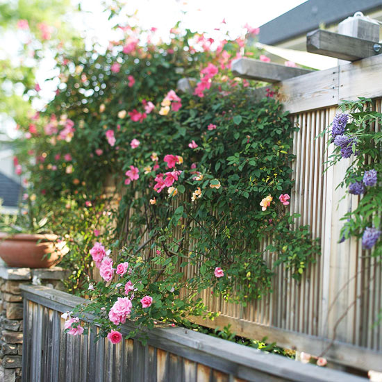 Fence and Arbor