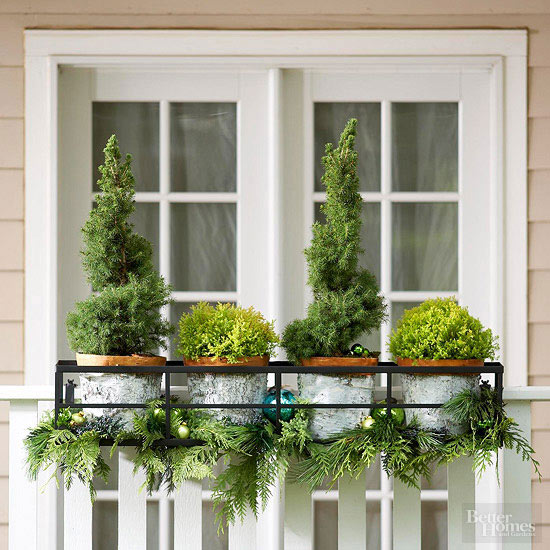 Potted evergreens decoration