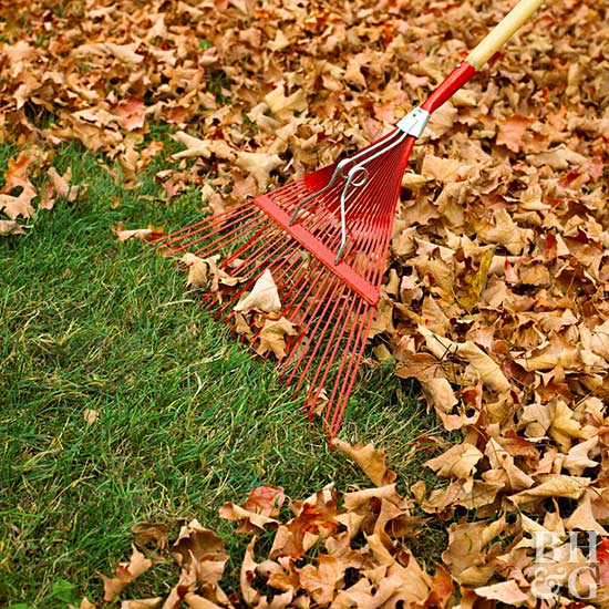 Raking leaves, Rake, leaves, leaf, lawn, grass