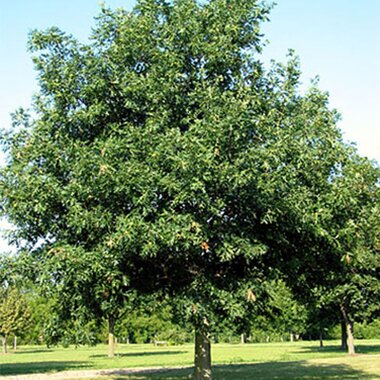 Selecting Trees for Your Yard | Better Homes & Gardens on unknown plants, philadelphia plants, sahara plants,