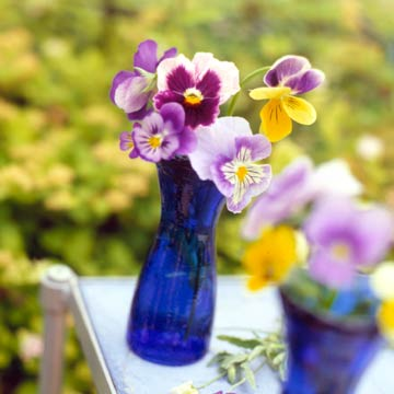 Purple Pansies in a Clear Vase