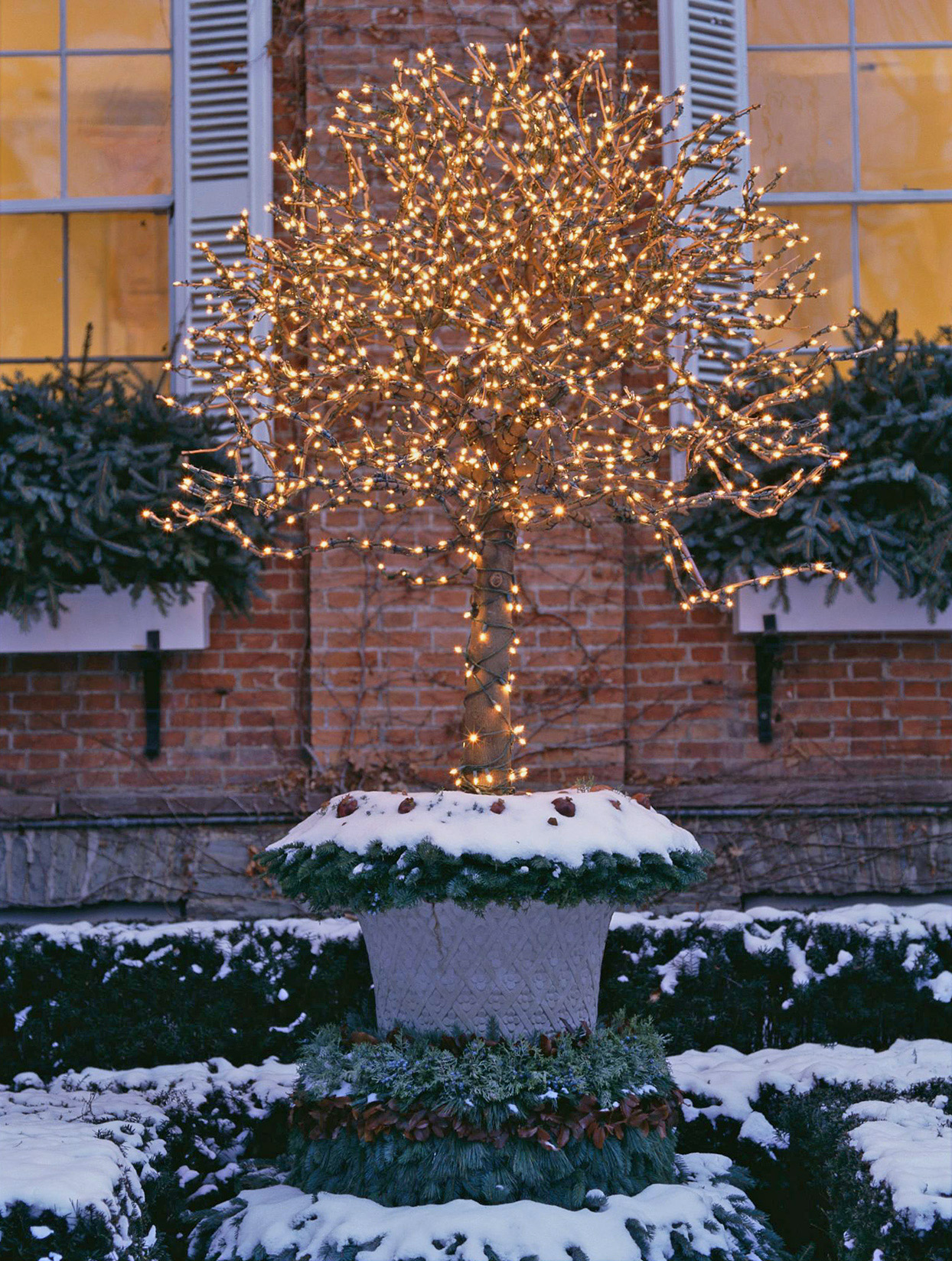lights tree winter container