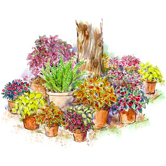 Shade-Loving Container Garden Plan